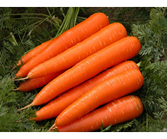 Vietnam Fresh Carrot