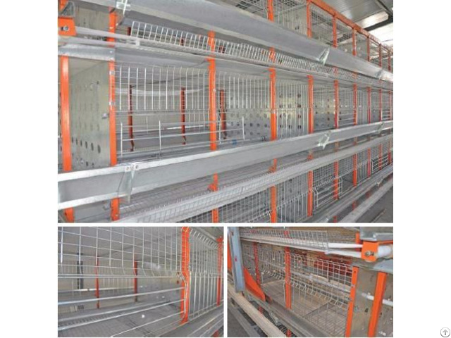 H Type Automatic Pullet Coop Poultry Equipment