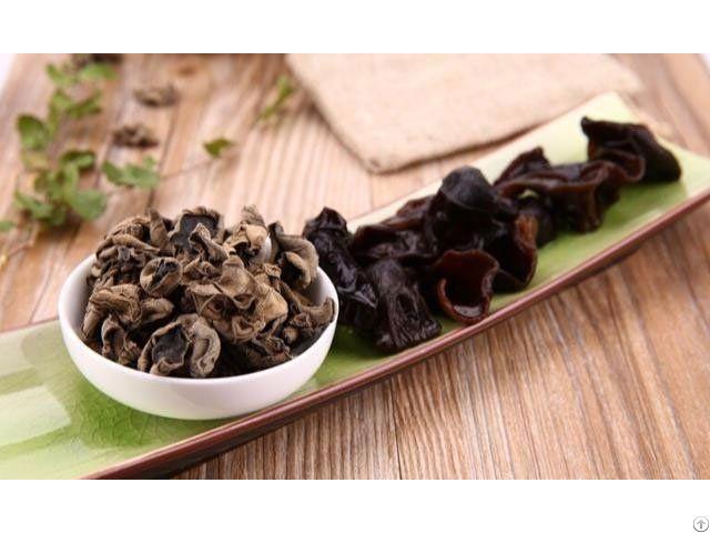 Wood Ear Mushroom Fungus