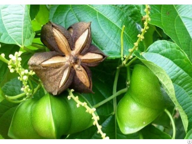 Organic Sacha Inchi Seeds