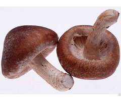 High Quality Shiitake Mushroom Extract