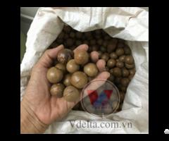 Macadamia Nuts From Viet Nam