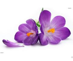 Saffron Purple Flowers