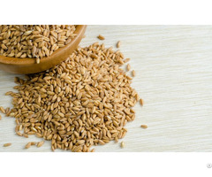 Farro Wheat For Sale