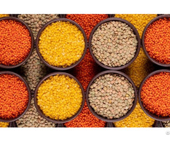 Red Yellow And Brown Lentils For Sale