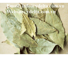Organic Dried Soursop Leaf