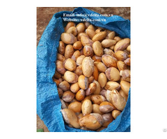 Durian Seed Fruit Tree Seeds From Vietnam