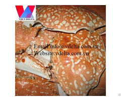High Quality Crab Shell Vdelta