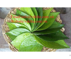 High Quality Betel Leaf Vdelta