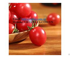 Fresh Tomato High Quanlity