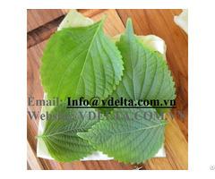 Dried Perilla Frutescens