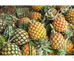 Pineapple Fresh Frozen Dried