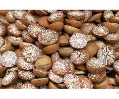 Dried Betelnut