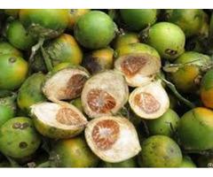 Fresh Betelnut