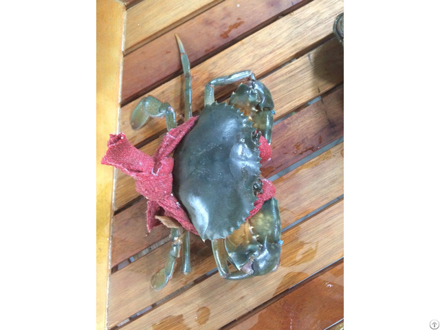 Live Mud Crab Origin Vietnam