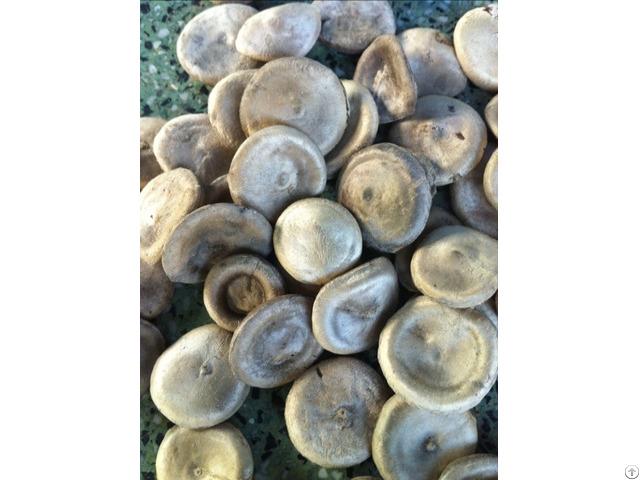 Nux Vomica Seeds