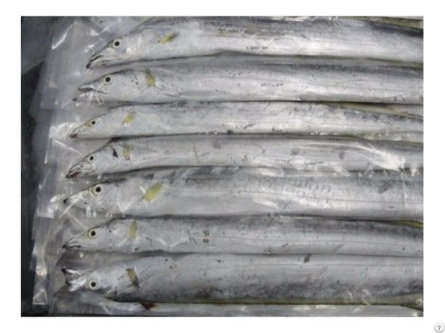 Frozen Ribbon Fish