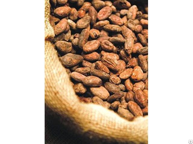 Cocoa Bean3