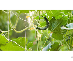 Plant Support Net Pea And Bean Cucumber /tomato Climbing Mesh Pp Netting