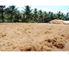 Coconut Fiber For Sale