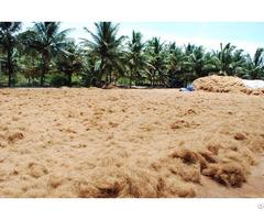 Coconut Fiber For Sale