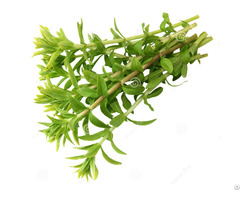 Dried Rice Paddy Herb
