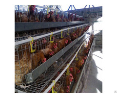 Battery Chicken Layer Cage Sale For Farm