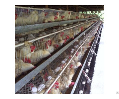 Design Layer Chicken Cages For Poultry Farm With Water Treatment System