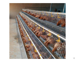 Egg Layer Farm Chicken Cage For Exporting