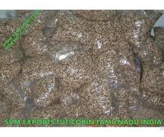 Moringa Seed Exporters India