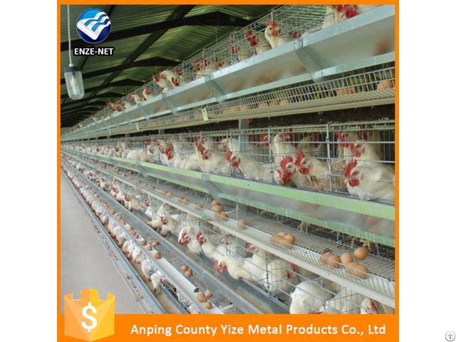 Battery Cages Laying Hens Poultry Africa