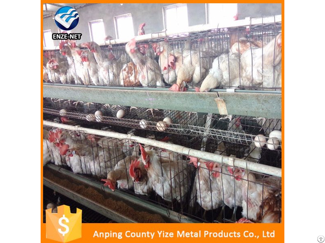 Automatic Poultry Farming System For Chickens Layer Cages With Capacity Of 340 Birds Per Cage