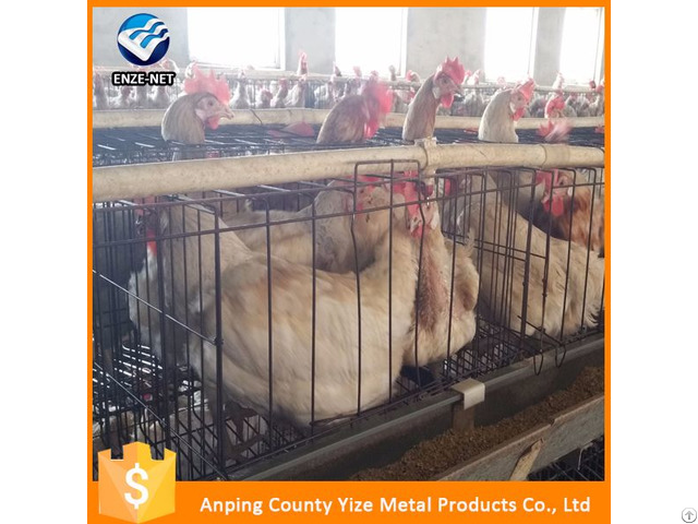 Best Sale Uganda Poultry Farm Automatic Chicken Layer Cage In South Africa