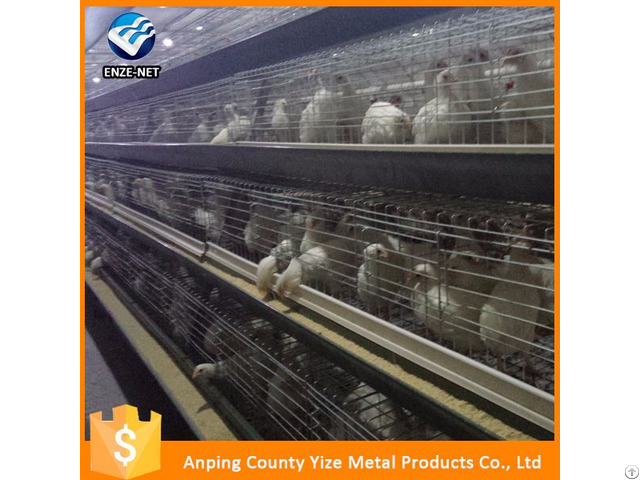 Chickens Feeds Production Poultry Equipment For Layer Chicken