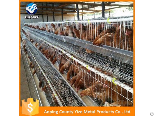 Raising Broiler Chicken Farm Poultry Equipment For Sale