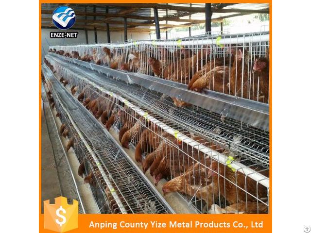 Raising Broiler Chicken Farm Poultry Equipment For Sale