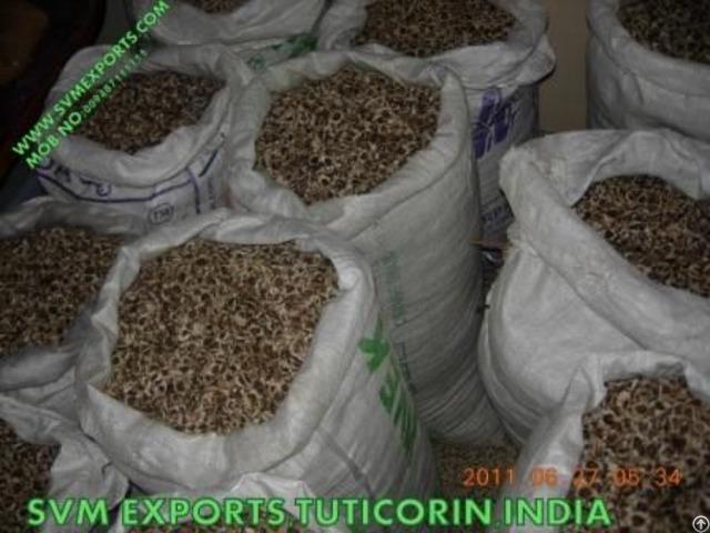 Pure Moringa Seed Exporters