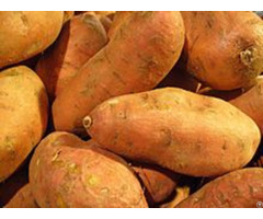 Sweet Potato Exporters