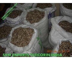 Best Price Moringa Seed Suppliers