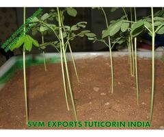 Best Price Moringa Tea Cut Leaf Suppliers