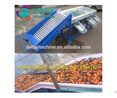 Fruit Sorting Machine