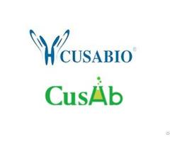 Jak3 Antibody Biotin Conjugated