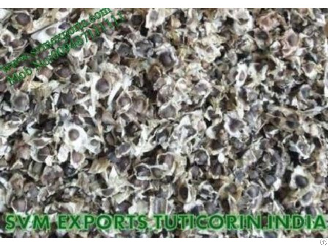 Pure Herbal Moringa Seed Suppliers
