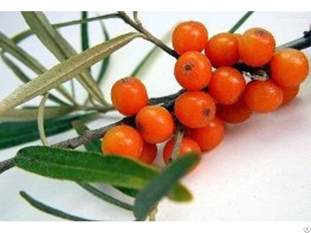 Iso Approved Seabuckthorn Fruit Oil Healthy Food