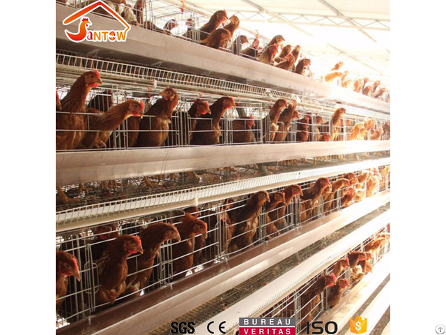 Chicken Cage System In Kenya