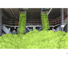 Green Seaweed Powder Agro Grade