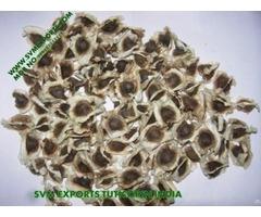 Superior Quality Moringa Pkm1 Seed Exporters India