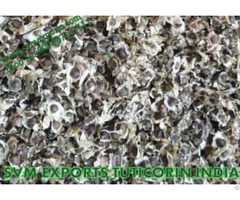 Global Moringa Pkm1 Seed Exporters India