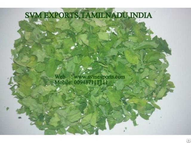 Global Brand Moringa Dry Leaves Exporters