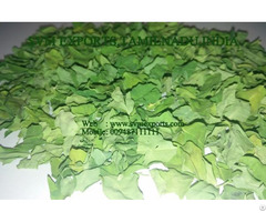 Natural Moringa Dry Leaf Exporters India